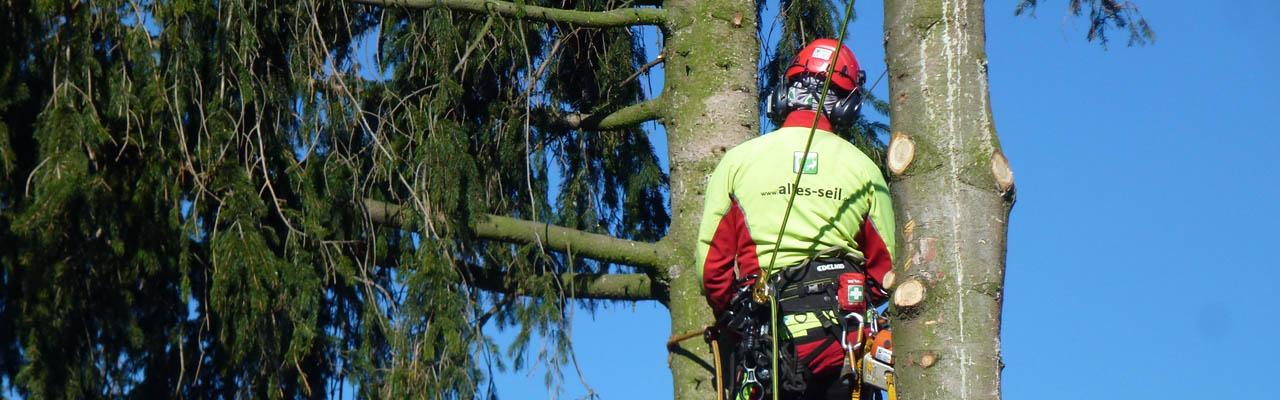 Baumpflege und Baumfällung